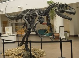 Allosaurus at the San Diego Natural History Museum