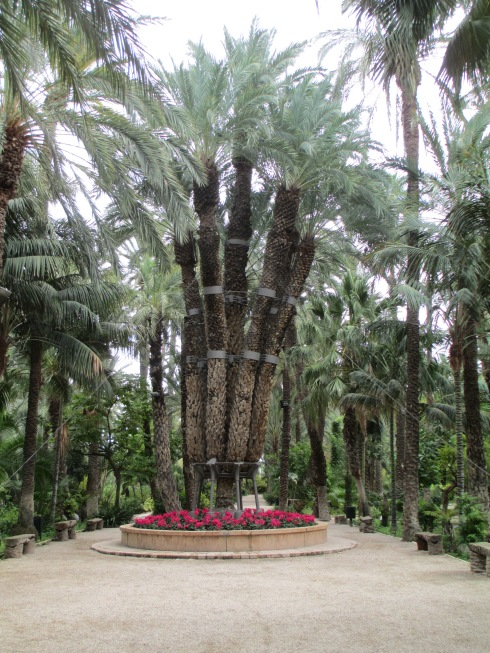 Seven branch Imperial Palm