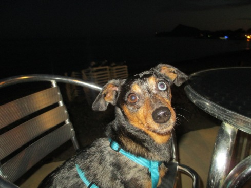 Pepper at beachside concert in Altea